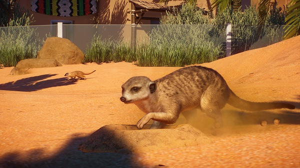 Master Meerkat care