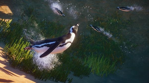 Perfect your Penguin enclosure