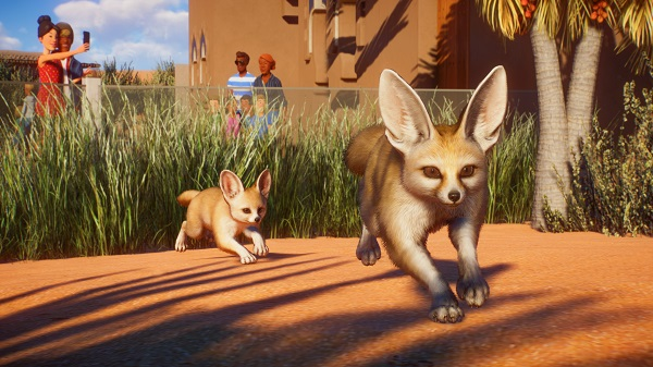 Keep your Fennec Foxes happy