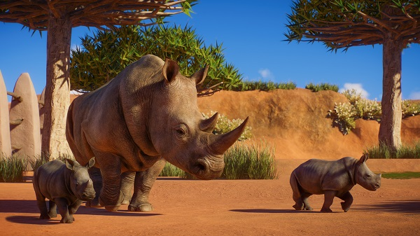 Make way for the Southern White Rhino
